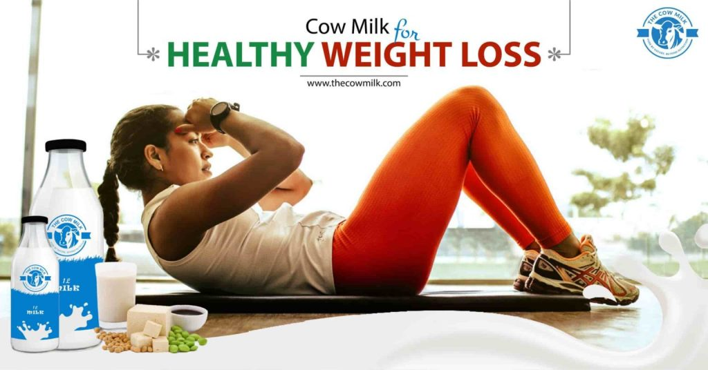Cow Milk for Healthy Weight Loss