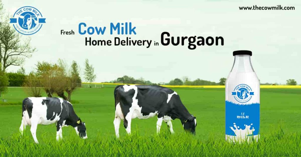 Looking for Fresh Cow Milk Home Delivery in Gurgaon
